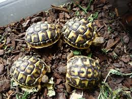 Tortue Annonce Animaux Pas Cher Mes Occasions Com